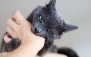 Как отучить котенка, кота, кошку кусаться и царапаться: ТОП советов