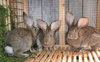 Дома для кроликов своими руками