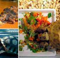 Можно ли сухопутной черепахе дыню