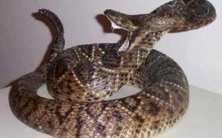 Смертельный укус змеи