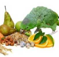 Питание для попугая амазона