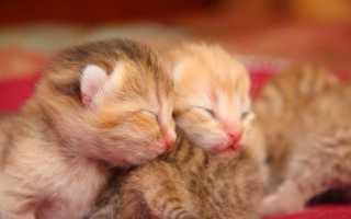 Через сколько котята открывают глаза