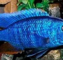 Самые красивые домашние рыбки