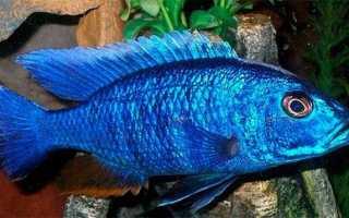 Пресноводные аквариумные рыбки фото