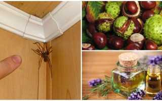 Средство от пауков в доме