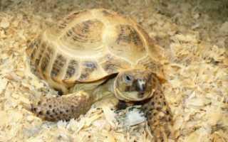 Сайт красноухих черепах