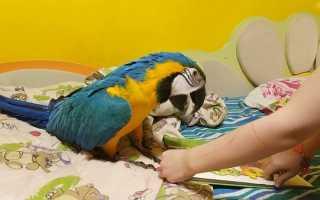 Как можно поиграть с попугаем волнистым