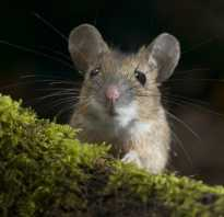 Какого размера мыши