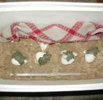 Как рожают черепахи