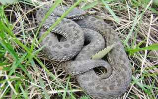 День когда змеи уходят в спячку