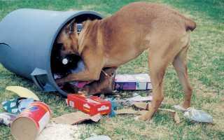 Как отучить собаку подбирать еду на улице: методы и советы