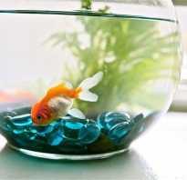 Какие рыбки подходят для маленького аквариума