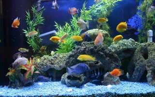 Сколько можно рыбок в аквариум 40 литров