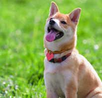 Дрессировка собак команды и жесты