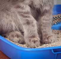 Котам от поноса