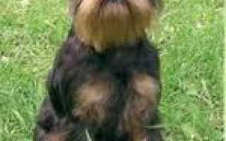 Декоративные породы собак список
