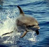 Чем отличается акула от касатки