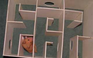 Лабиринт для хомяка из коробки