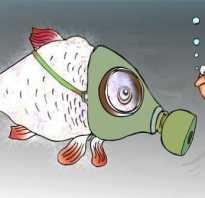Рыбка открывает рот у поверхностиводы: глотает, хватает воздух кислород, задыхается, что делать?