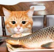 Можно ли котам есть рыбу