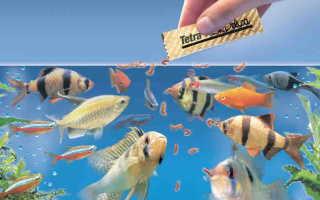 Сколько раз в сутки кормить рыбок