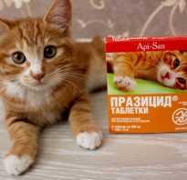 Празицид таблетки для кошек и собак: инструкция по применению