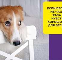 Желтая рвота у собаки без поноса