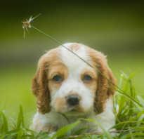 Какие глисты у собак фото