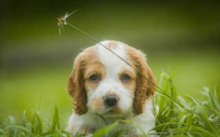 Какие виды глистов у собак