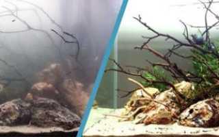 Почему вода в аквариуме грязная и мутная: почему быстро мутнеет, как избавиться