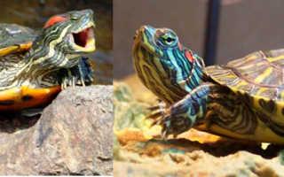 Почему черепаха не ест корм
