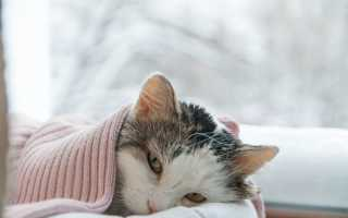 Как определить болеет ли кошка