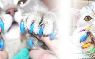 Накладки и колпачки для кошек на когти: польза и вред, размеры и правила использования