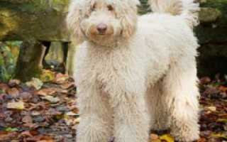 Популярные средние породы собак
