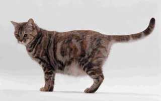 Сколько кошка ходит беременная в первый раз и последующие, факторы