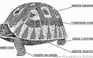 Сколько зубов у черепах