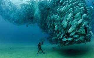 Полосатая рыба название