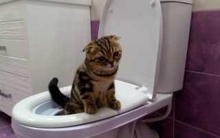 Как отучить кота или кошку гадить в неположенном месте: советы специалиста, что делать