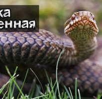 Сколько живут змеи в природе