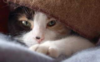 Кошка болеет что делать
