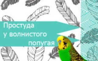 Попугай простыл как лечить