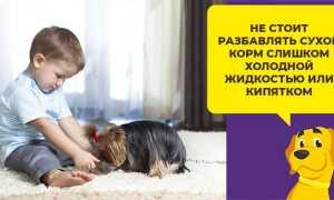 Как замачивать сухой корм для собак