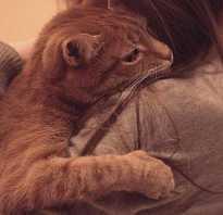 Кошка умирает от старости что делать
