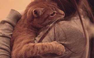 Кот умирает как помочь