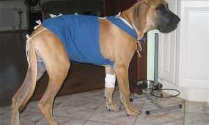 Травматин для собак: инструкция, применение, отзывы