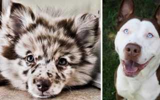 Скрещенные породы собак фото с названиями