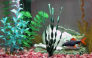 Как приготовить аквариум для рыбок