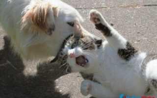 Почему кошки не любят мокнуть: причины, сравнение с собаками
