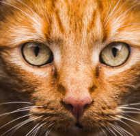 Бездомный кот возвращается в семью, которую привык считать родной