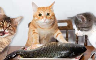 Какой рыбой можно кормить котят